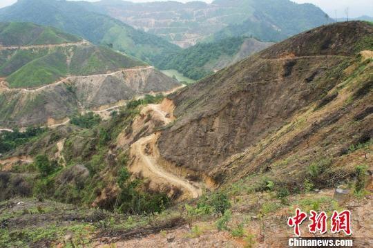 广东韶关水库周边数千亩森林被砍伐(组图)